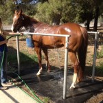 Offer Superior Equestrian Stable Mats with the Flowmat™